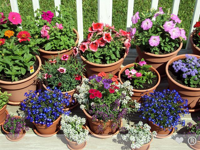 Pot Garden Ideas garden design with container gardening ideas for small yards hostelgardennet with landscape ideas front container Farmec Sa Garden Flower Pot And Cover With Trade Romaniaro